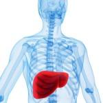 Что означает персистирующий гепатит?