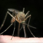Симптомы малярии — как распознать болезнь