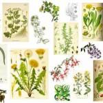Cвойства лекарственных трав