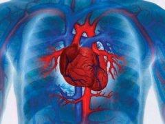 Сердечно-сосудистая система и нервная – их взаимосвязь