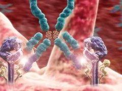 Клеточный и гуморальный иммунитет
