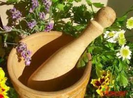 сдать лекарственные травы