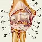 Болезни локтевого сустава