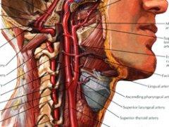 Откуда сильные боли в шее берутся