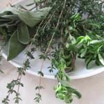 Какие травы для иммунитета бывают
