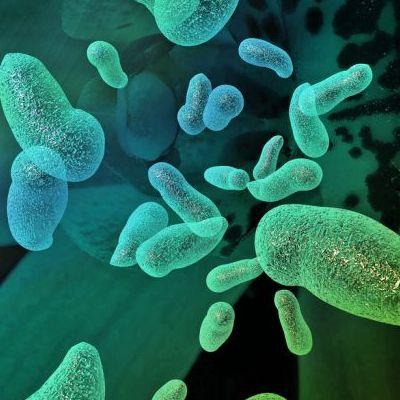 Пробиотики - помогают или нет?