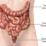 Своевременная диагностика симптомов энтерита – залог успешного лечения