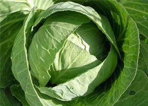 Для компрессов от бурсита идеально подойдут три овоща – свекла, капуста и картофель