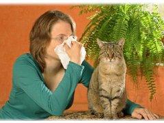 Симптомы аллергии на кошек: как распознать проявления болезни?