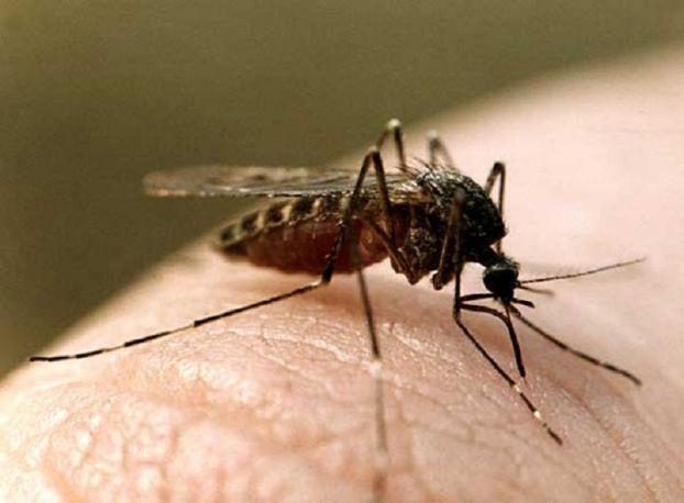 Как переносится возбудитель малярии?