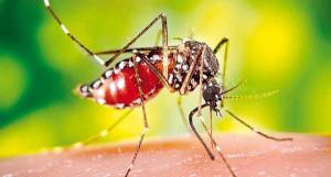 В качестве профилактических мероприятий в основном используется вакцинация от малярии