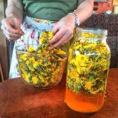 В лечении недуга поможет сок цветков одуванчиков с сахаром