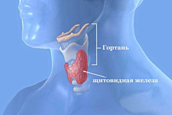 Диффузное увеличение щитовидной железы 1 степени: в чем кроется корень зла?