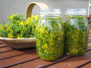 Для лечения из травы зверобоя можно приготовить, как настой так и отвар
