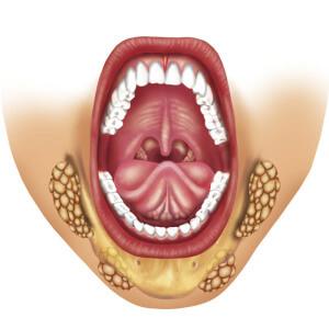 Анатомия слюнных желез: изучаем строения органа