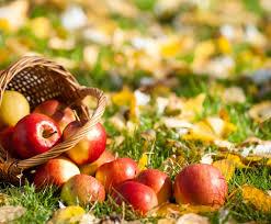 Яблоки включены в диету при диабете