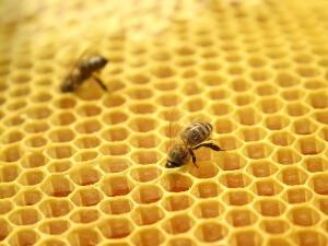 Продукты пчеловодства иногда вызывают аллергическую реакцию