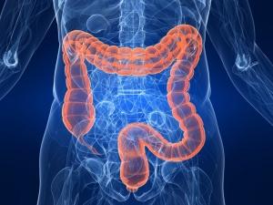 Нарушение работы кишечника: симптоматика и способы его преодоления