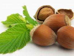 Лесной орех фундук: польза и вред для здоровья человека