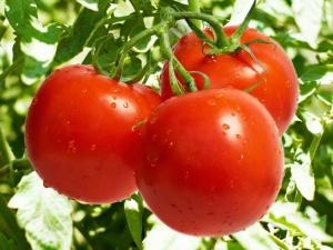 Красные помидоры - вкусны и полезны