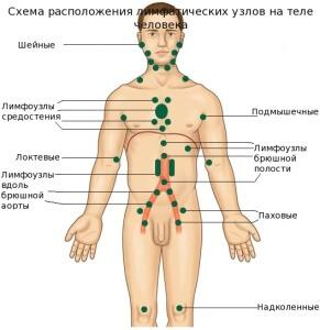 Расположение лимфоузлов на ногах и других частях тела, причины их увеличения