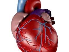 ОАП сердца: причины и симптомы нарушения, методы лечения