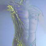 Как очистить лимфу в домашних условиях: функции лимфы и способы очистки