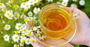 Перед употреблением ромашкового чая необходима консультация специалиста