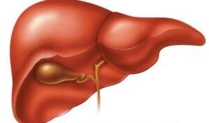 Симптомы червей в печени человека: признаки наличия паразитов