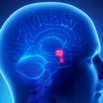 Основные симптомы болезни гипофиза: признаки распространенных патологий