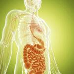 Дивертикулярная болезнь сигмовидной кишки: симптомы заболевания
