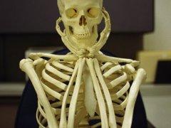 Скелет верхних конечностей человека: значение и основные функции