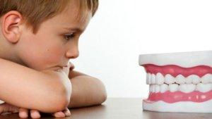 Зубы - важная составляющая часть ротовой полости