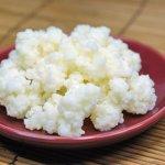 Тибетский молочный гриб: полезные свойства средства и противопоказания