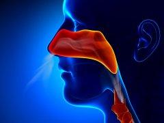 Анатомия горла: из чего состоит этот орган