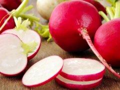 Редис: польза и вред, история появления, рецепты вкусных блюд