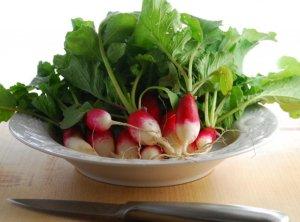 Какие полезные и вредные свойства содержит редис