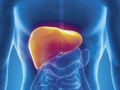 Фиброз печени 2 степени: особенности лечения патологии
