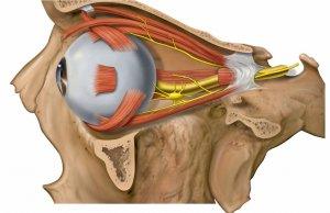 Атрофия глазного нерва: лечение с устранением причин, симптомов заболевания