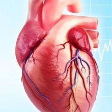 Сердечный выброс: норма и причины отклонения