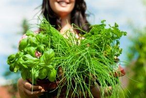 Лечение травами молочной железы
