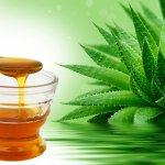 Рецепты от кашля с алоэ и медом для взрослых и детей