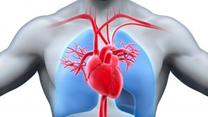 Признаки при аномалии хорды желудочка