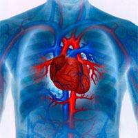 Как проводится оценка сердечнососудистой системы