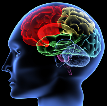Воспаление мозгов - виды и симптомы заболеваний
