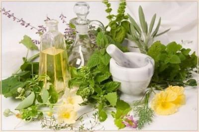 Лекарственные растения на фото помогут собрать необходимые травы самостоятельно