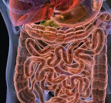 Эффективные препараты для лечения дисбактериоза