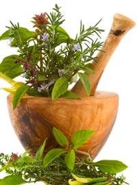 Манжетка лекарственная: целебные свойства и применение в народной медицине