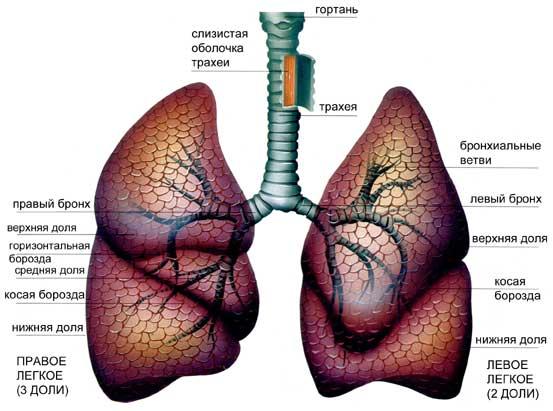 Нагноительные заболевания легких