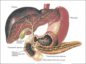 Характерные признаки и симптомы воспаления поджелудочной железы